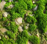 Free Photo - Moss and stones
