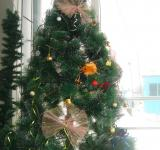 Free Photo -  New years fir tree