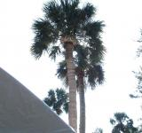 Free Photo - Palm Tree