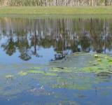 Free Photo - Lily Pads on Lake