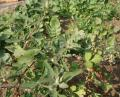 Free Photo - Vegetable plants