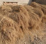 Free Photo - Pile of hay