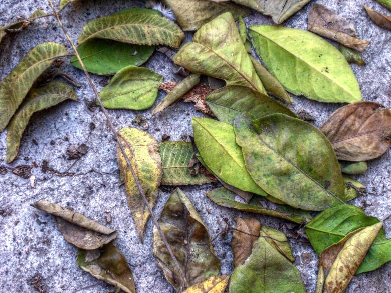 Free Stock Photo of Leafs on ground Created by homero chapa
