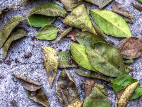 Leafs on ground - Free Stock Photo