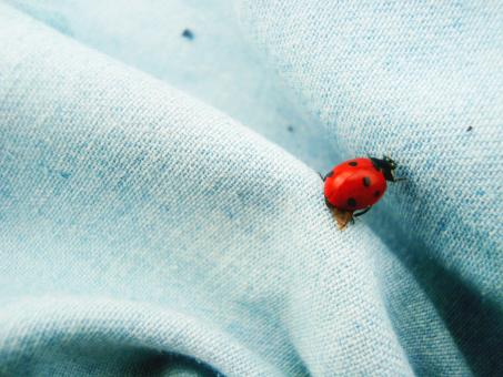 LadyBird - Free Stock Photo