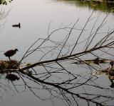 Free Photo - Birds nest in the water