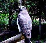 Free Photo - Bird of Prey - Hawk