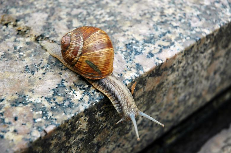 Free Stock Photo of Snail Created by Max van Holten