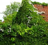 Free Photo - Overgrown House