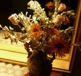 Free Photo - Dry flowers