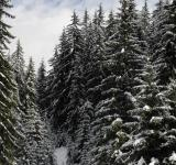 Free Photo - Winter Wonderland in Central Rhodopes