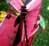 Free Photo - Dragonfly Closeup