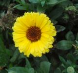 Free Photo - Yellow Sun Flower