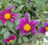 Free Photo - Purple Flowers