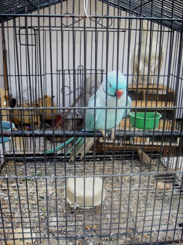 Free Stock Photo of Blue Parrot Created by Ali Haider