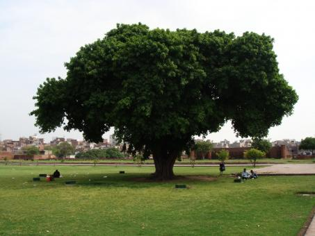 Tree by Lahore shahi fort - Free Stock Photo