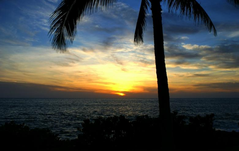 Free Stock Photo of Coconut Sunset Created by Barry Haynes