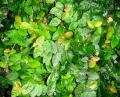 Free Photo - Green small leaves