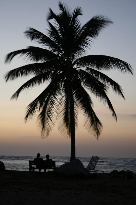 Free Stock Photo of Palm Tree Silhouette Created by GusRomanPhotography