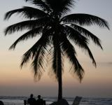 Free Photo - Palm Tree Silhouette