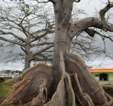 Free Photo - Tree Roots