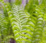 Free Photo - Fern plant texture