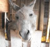 Free Photo - Funny donkey face