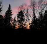 Free Photo - Forest sunset