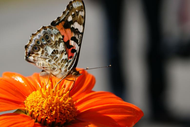 Free Stock Photo of Butterfly Created by Barry Haynes