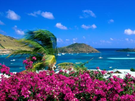 Tropical Landscape - Free Stock Photo