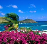 Free Photo - Tropical Landscape
