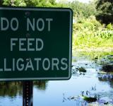 Free Photo - Do Not Feed the Alligators