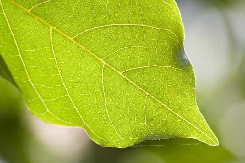 Free Stock Photo of Green leaf Created by madzindia