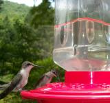 Free Photo - Thirsty Birds