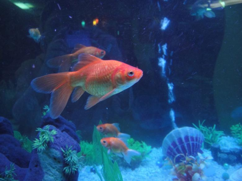Free Stock Photo of Fish aquarium Created by Ali Haider