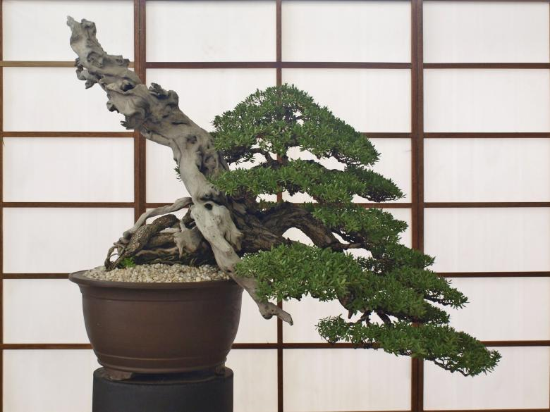 Free Stock Photo of Bonsai Created by Ed Davad