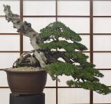 Free Photo - Bonsai