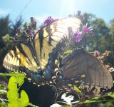 Free Photo - Alluring Butterflies