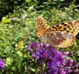 Free Photo - Dazzling butterfly