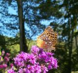 Free Photo - Enchanting Butterfly