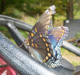 Free Photo - The Hitchhiker