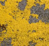 Free Photo - Yellow Paint Texture
