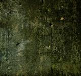 Free Photo - Green Concrete Texture