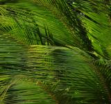 Free Photo - Palm Leaves