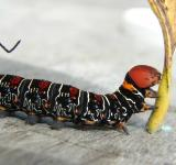 Free Photo - Colorful Caterpillar