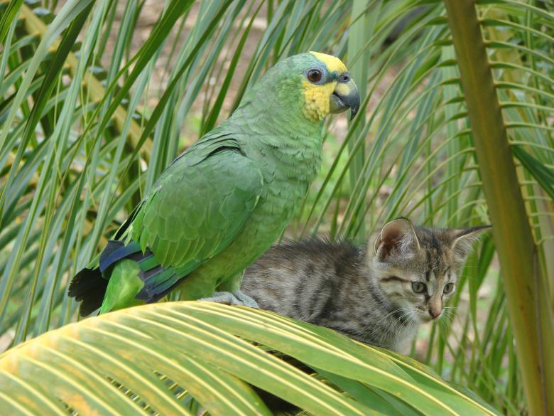 Free Stock Photo of Bird and Cat on Palm Tree Created by Stefan Giuliani