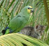 Free Photo - Bird and Cat on Palm Tree