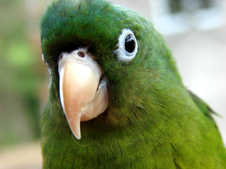 Free Stock Photo of Parrot Kid Created by Stefan Giuliani