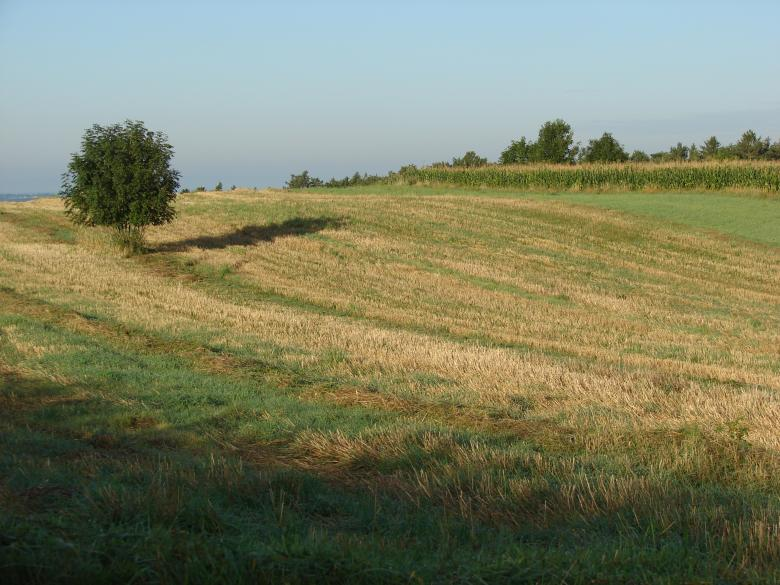 Free Stock Photo of Mown Wheat Field Created by Stefan Giuliani