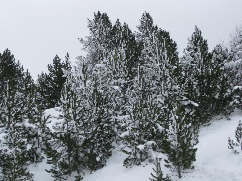 Free Stock Photo of Snow in Andorra Created by jaume